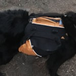 Kurgo Baxter Dog Backpack Reviewed