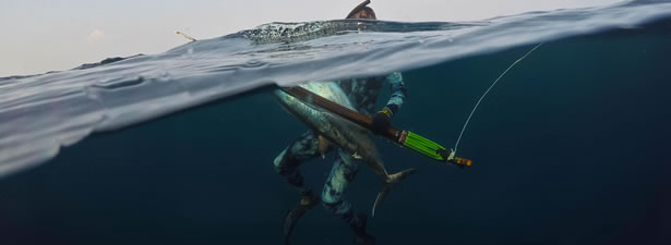 catching a tuna